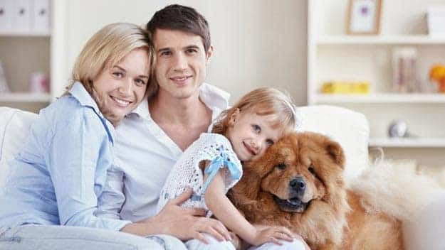 Wills & Trusts dog-young-family Direct Wills Derbyshire